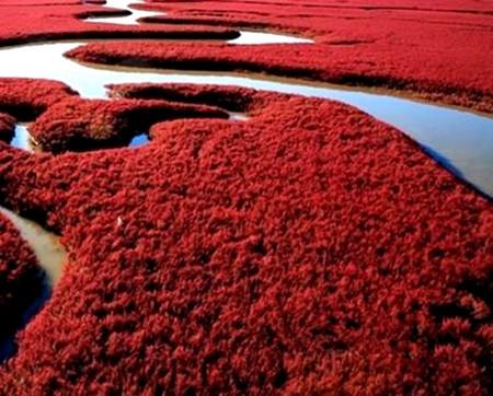 盘锦红海滩,苇海观鹤,本溪关门山二日